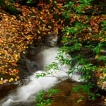 Raven Cliff Falls