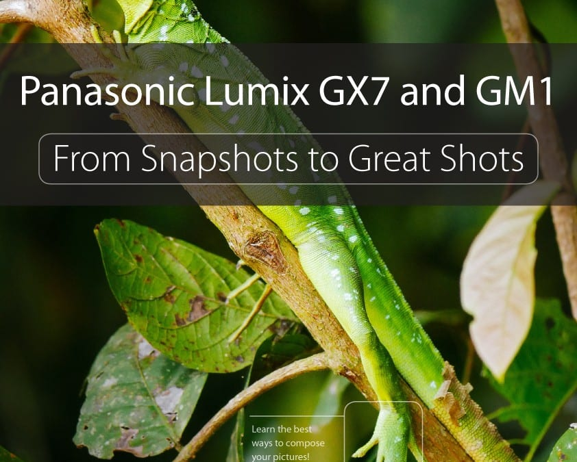 LUMIX GX7/GM1 Book available now