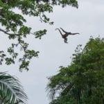 Costa Rica Photo Workshop monkey