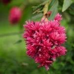 Costa Rica Photo Workshop flower